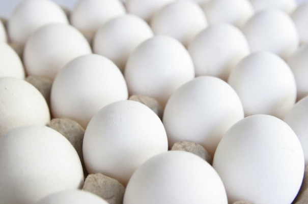 Egg Proteins